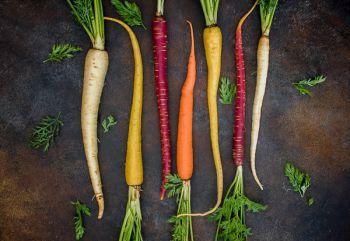 #4.2.2FP - La carotte